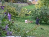 what-a-pleasure-to-enjoy-picking-big-apples-from-ones-own-garden_october2008_resize